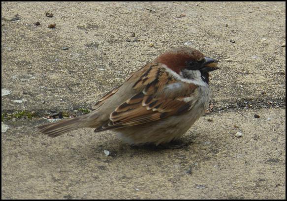Sparrow hybrid 1 280416