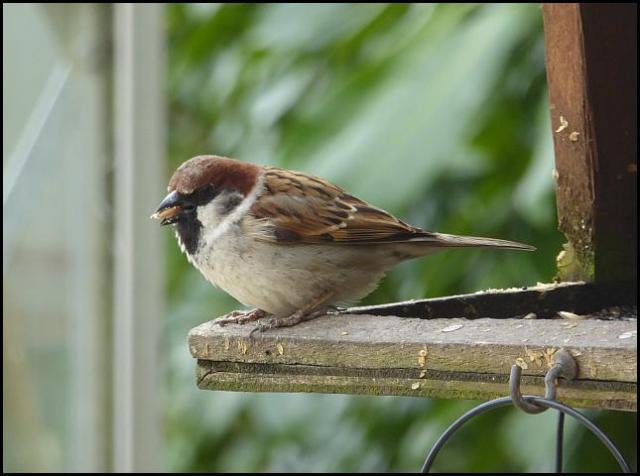 Sparrow hybrid 2 280416