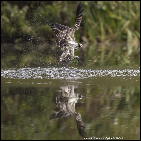 osprey-1-201016