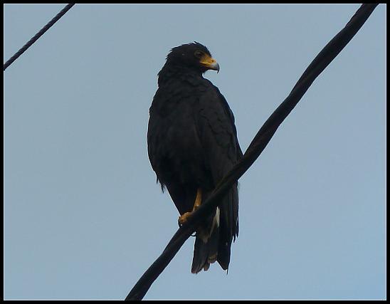 bz-black-hawk