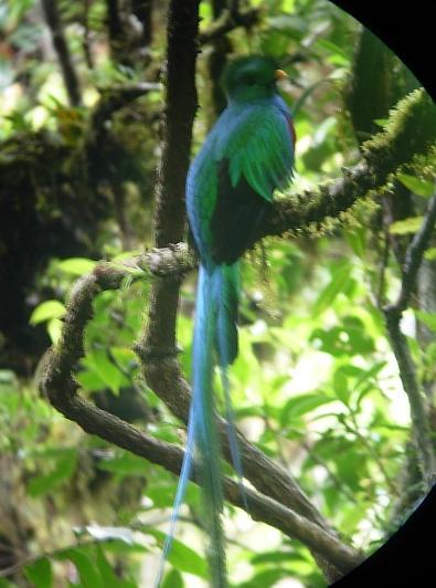 cr-resplendant-quetzal-210210