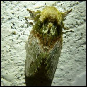 cr11-moth-2