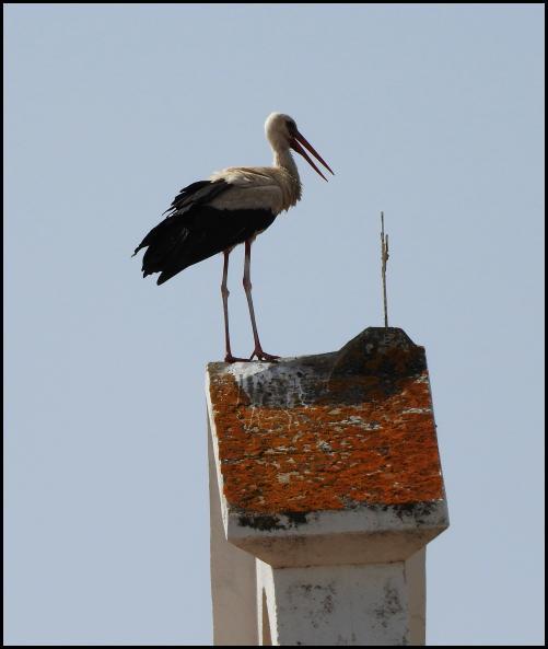 lv-white-stork