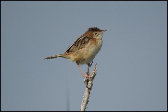 coto-ft-warbler
