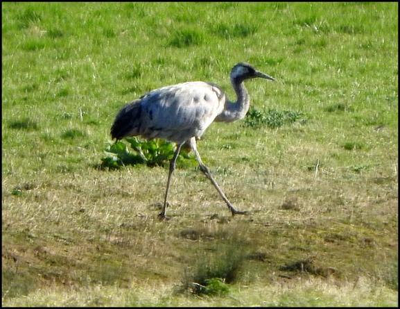 Crane 260317