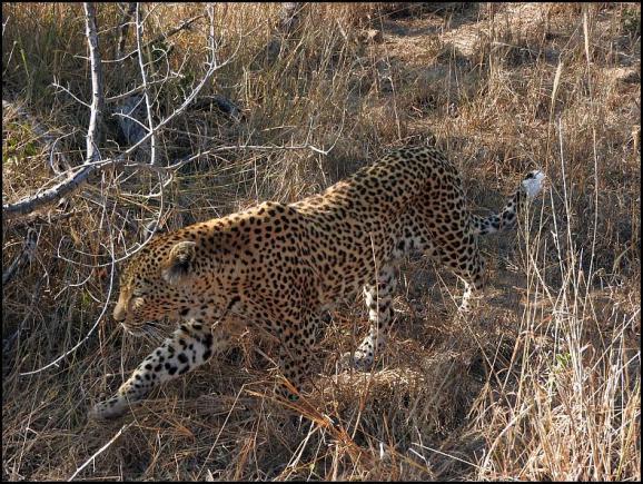 SA Leopard White Dam 1