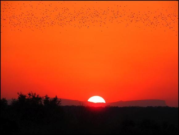 SA Quelea sunset