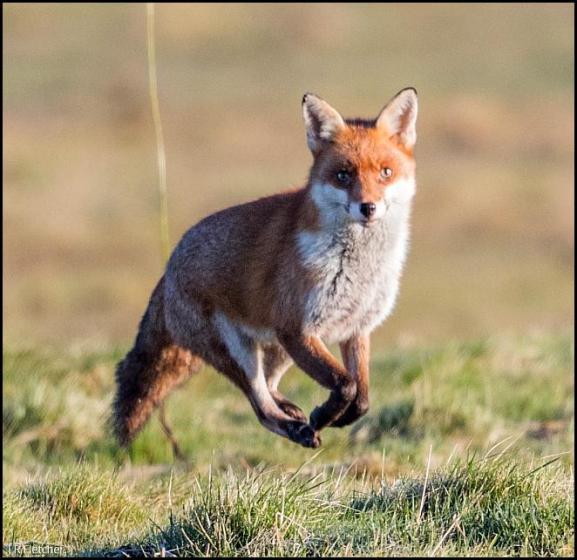 Fox 070218