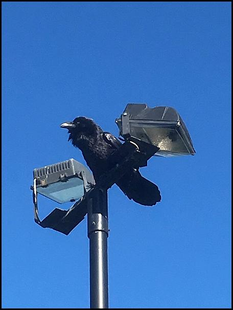 Raven 211018