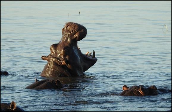 Bot - Hippo 2.jpg
