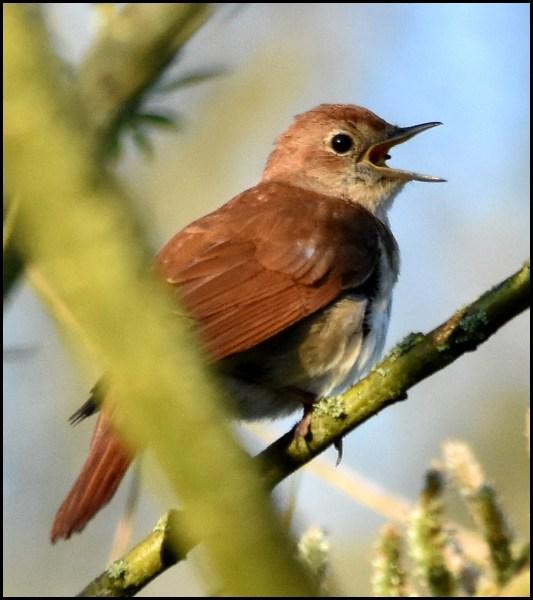 Nightingale 210419