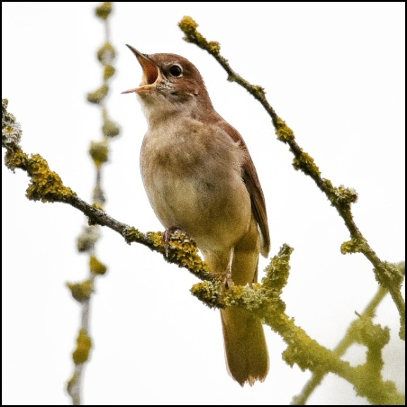 Nightingale 040519