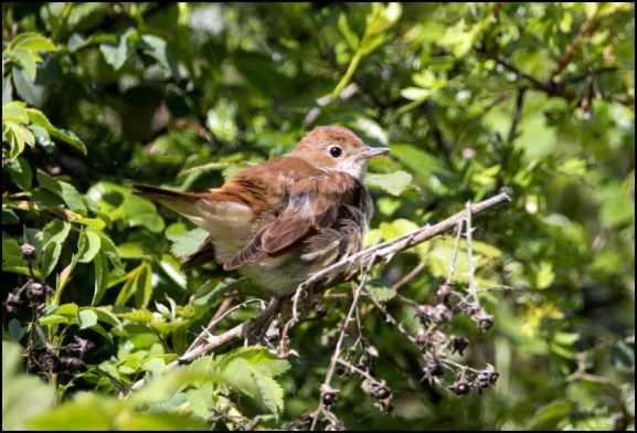 Nightingale 110519