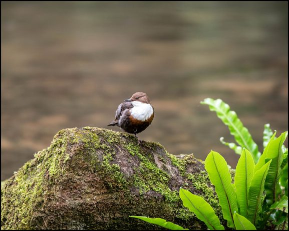 Dippers 030619
