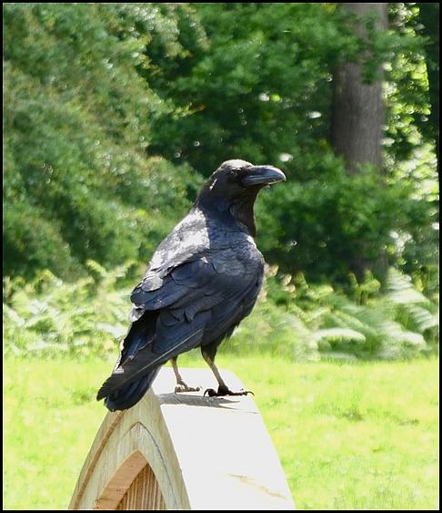 Raven 210619