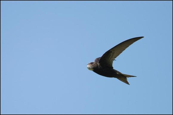 Swift 290619 1