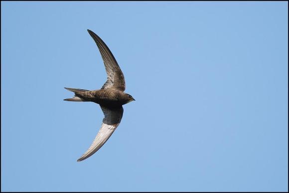 Swift 290619 2