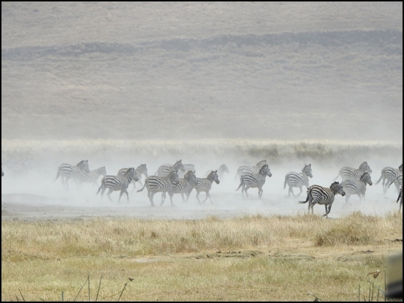 Ngorongoro Crater 2