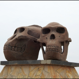 Road to Olduvai Gorge Paranthropus boisei & Homo habilis 2