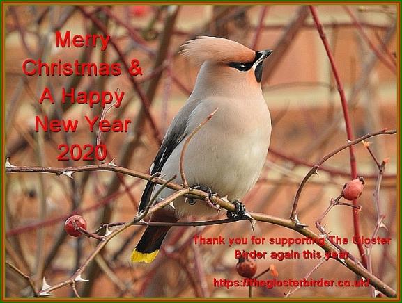 Christmas Card 2019.jpg
