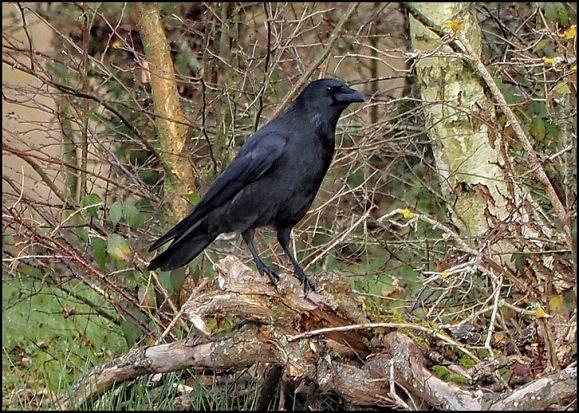 Raven 021219