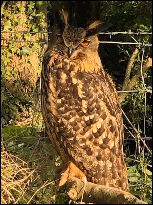 Eagle Owl 170420