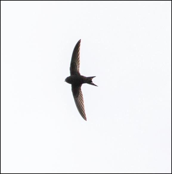 Swift 130520