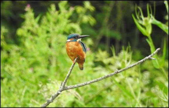 Kingfisher 200620