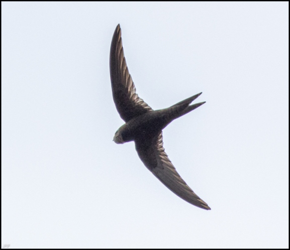 Swift 260720