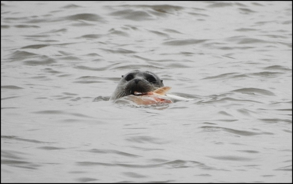 Common Seal 060820